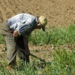 Dos jubilados sancionados por trabajar sus propias tierras